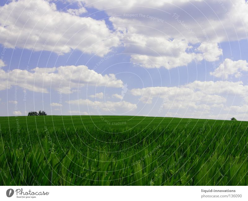 Freiheit II Feld Gras Gerste Baum grün Physik Frühling Kraft frisch saftig Wolken Horizont Sommer Himmel Wärme Natur frei blau