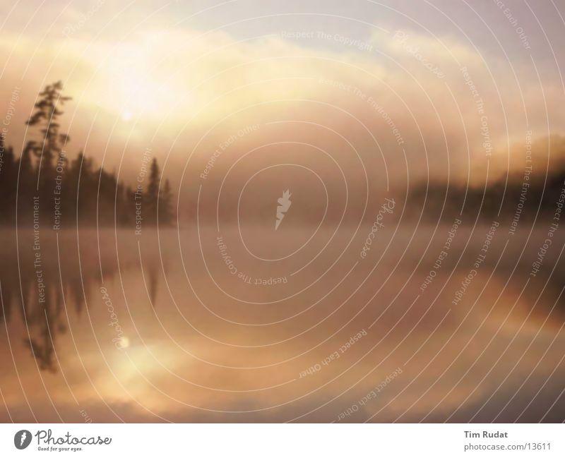 Morgens am Weiher Wasser Nebel