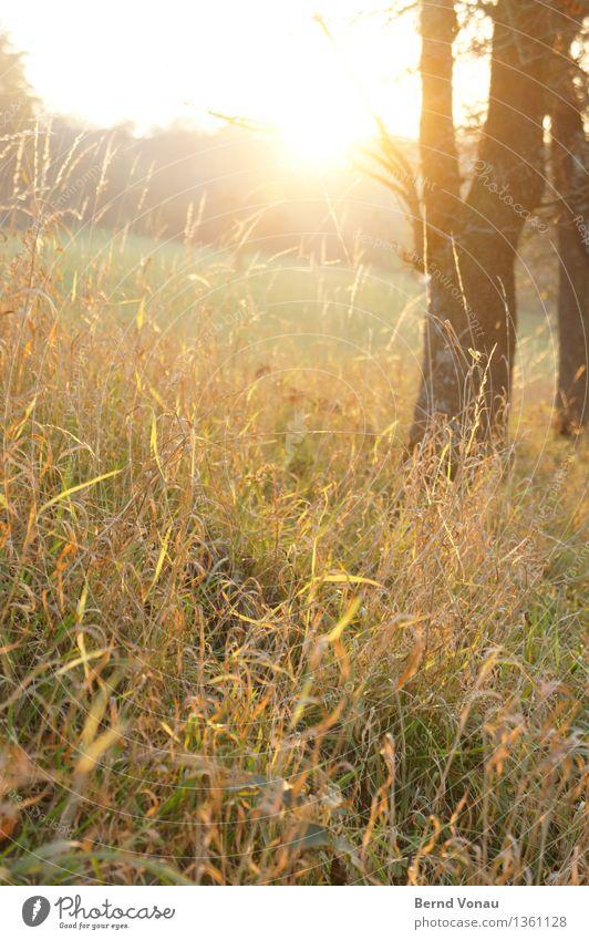 warm Umwelt Natur Landschaft Pflanze Herbst Baum Sträucher Feld schön Gefühle Zufriedenheit Leben trocken Wärme gelb orange Baumstamm Farbfoto Außenaufnahme