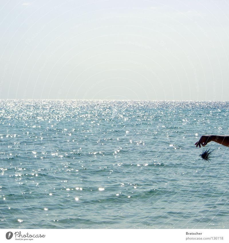 Kuba • Igelkontakt Seeigel stachelig gefährlich Meer Horizont Mutprobe Angeben Angst Panik Tier Spitze Stachel bedrohlich Diademseeigel