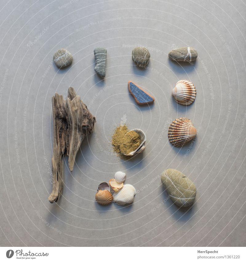 Fundsachen Strand Ferien & Urlaub & Reisen Souvenir Sammlung Sammlerstück Stein Sand Holz authentisch maritim natürlich Treibholz Muschelschale Kieselsteine