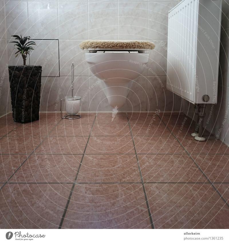 Toilette sauber geordnet Körper ruhig Duft Häusliches Leben Wohnung Innenarchitektur WCsitz Fliesen u. Kacheln hocken machen Reinigen sitzen dreckig Ekel frisch