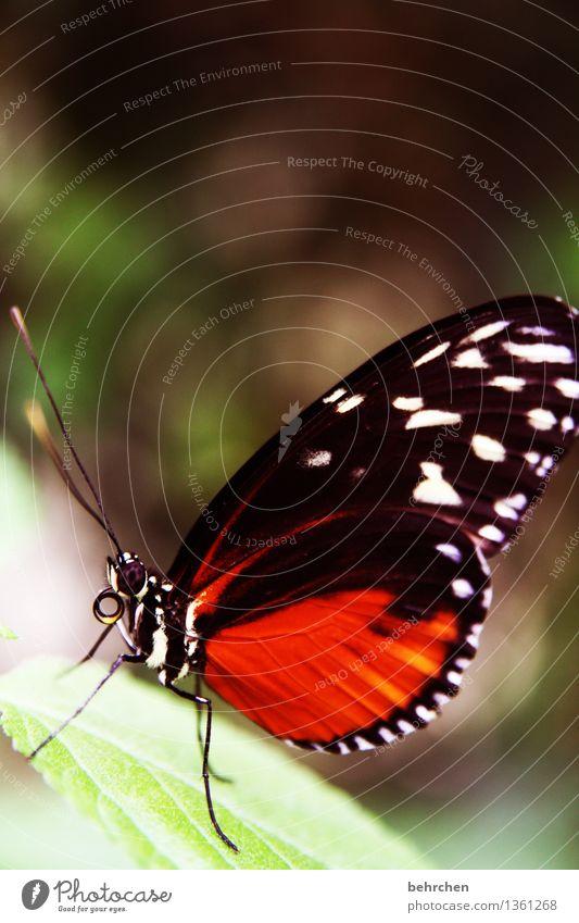 still gestanden! Natur Pflanze Tier Frühling Sommer Schönes Wetter Baum Blatt Garten Park Wiese Wildtier Schmetterling Tiergesicht Flügel 1 beobachten Erholung