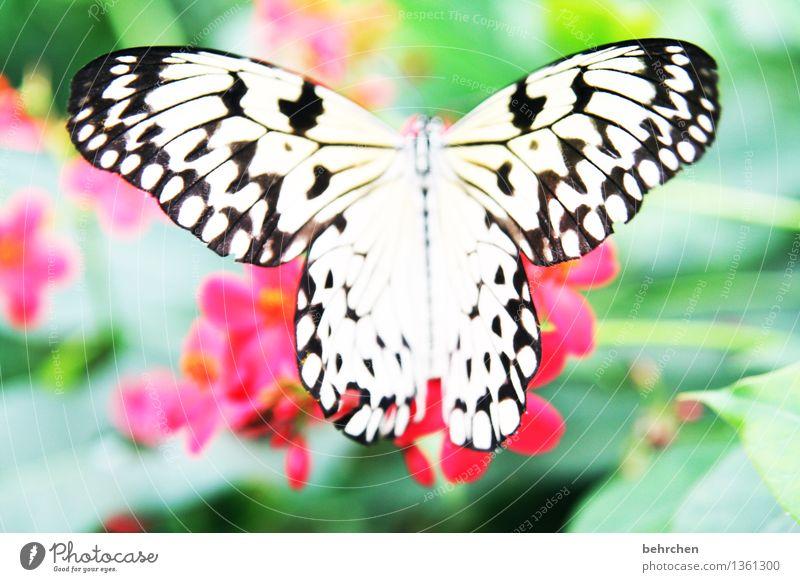 stoffvorlage Natur Pflanze Tier Frühling Sommer Schönes Wetter Blume Blatt Blüte Garten Park Wiese Wildtier Schmetterling Flügel 1 Blühend Erholung fliegen