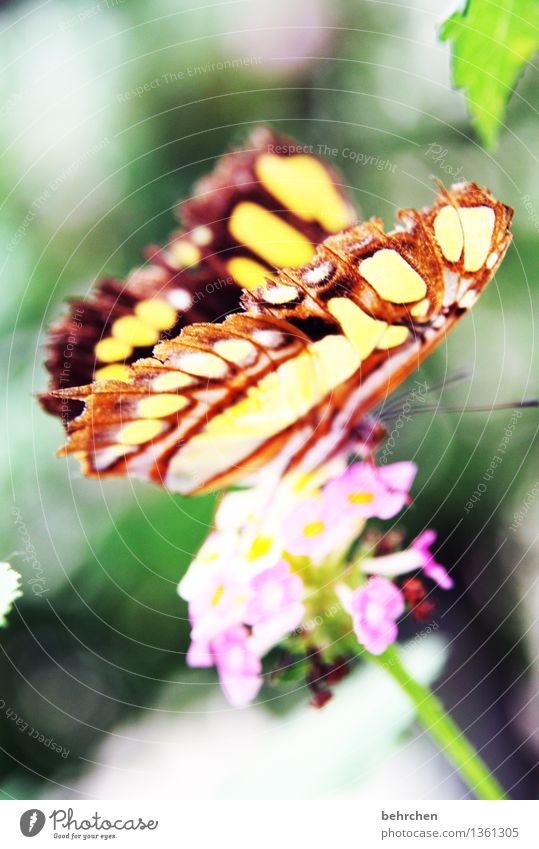 für barbara:) Natur Pflanze Tier Blume Blatt Blüte Garten Park Wiese Wildtier Schmetterling Flügel 1 beobachten Blühend Duft fliegen Fressen außergewöhnlich