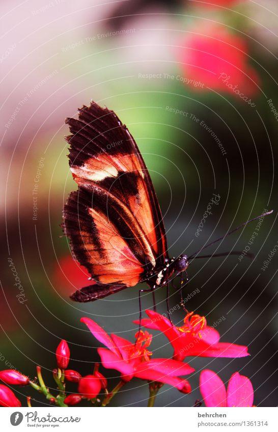 knallig Natur Pflanze Tier Sommer Schönes Wetter Blume Blatt Blüte Garten Park Wiese Wildtier Schmetterling Tiergesicht Flügel 1 beobachten Blühend Duft