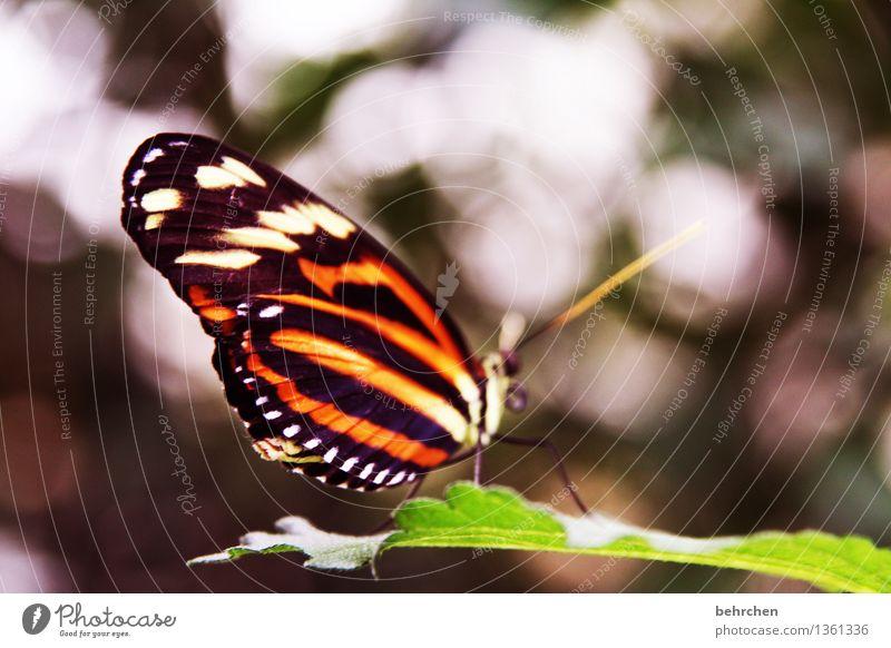zebra Natur Pflanze schön Sommer Baum Erholung Blatt Tier Frühling Wiese klein Garten außergewöhnlich fliegen orange Park