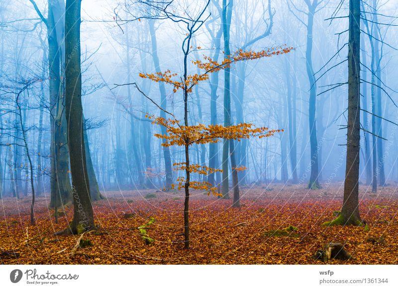 Fantasie Wald mit nebel und orangenem Laub blau Baum Blatt Herbst Frühling träumen Nebel Surrealismus Zauberei u. Magie bezaubernd mystisch Fantasygeschichte