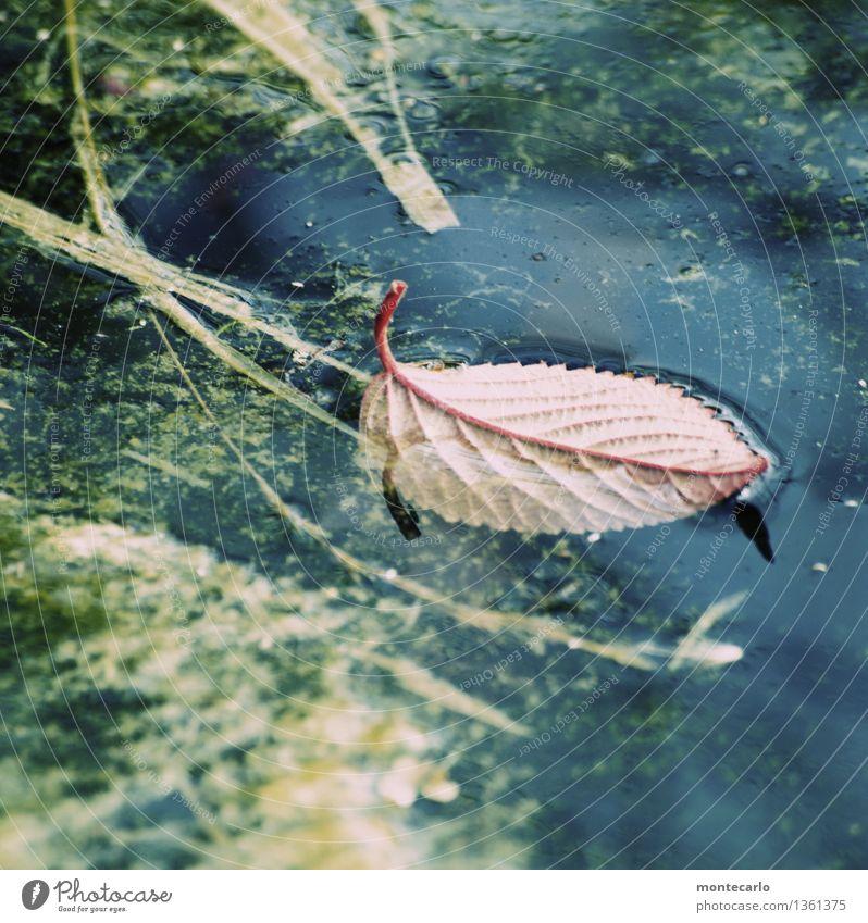 herbst Natur alt Pflanze Wasser Blatt kalt Umwelt Herbst natürlich klein braun wild trist authentisch Sträucher nass