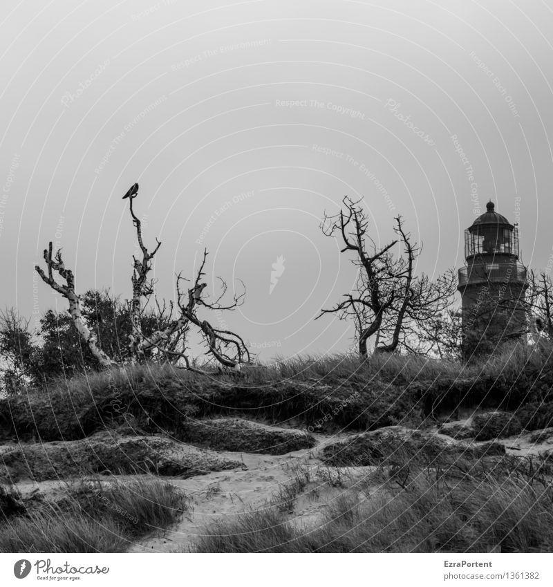 creepy Umwelt Natur Landschaft Sand Himmel Wolkenloser Himmel Herbst Winter Klima Klimawandel Wetter Pflanze Baum Gras Sträucher Küste Strand Tier Vogel Krähe 1