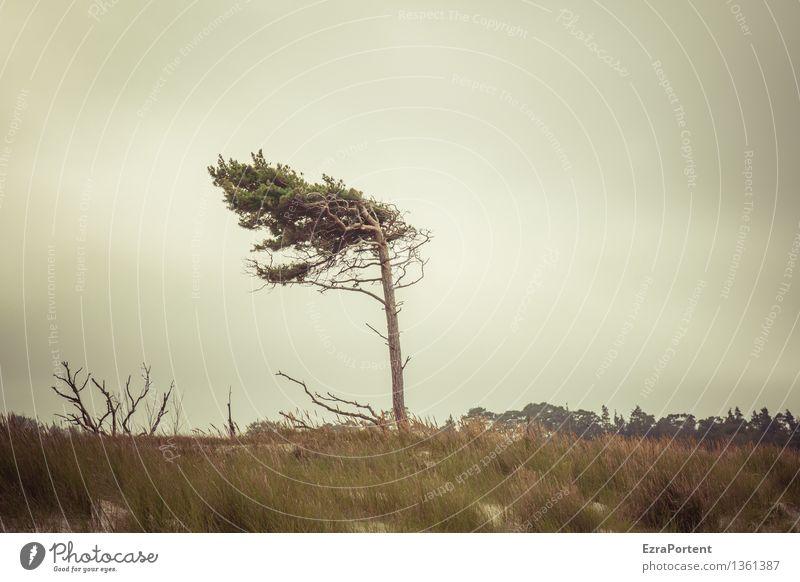 stell dich gerade hin! Ferien & Urlaub & Reisen Tourismus Umwelt Natur Landschaft Himmel Wolken Herbst Klima Klimawandel Wetter schlechtes Wetter Wind Sturm