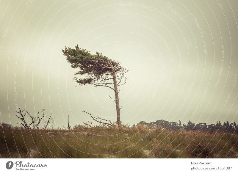 stell dich gerade hin! Himmel Natur Ferien & Urlaub & Reisen Pflanze Baum Landschaft Wolken Strand Umwelt Herbst Gras Küste Wetter Tourismus Wind Sträucher