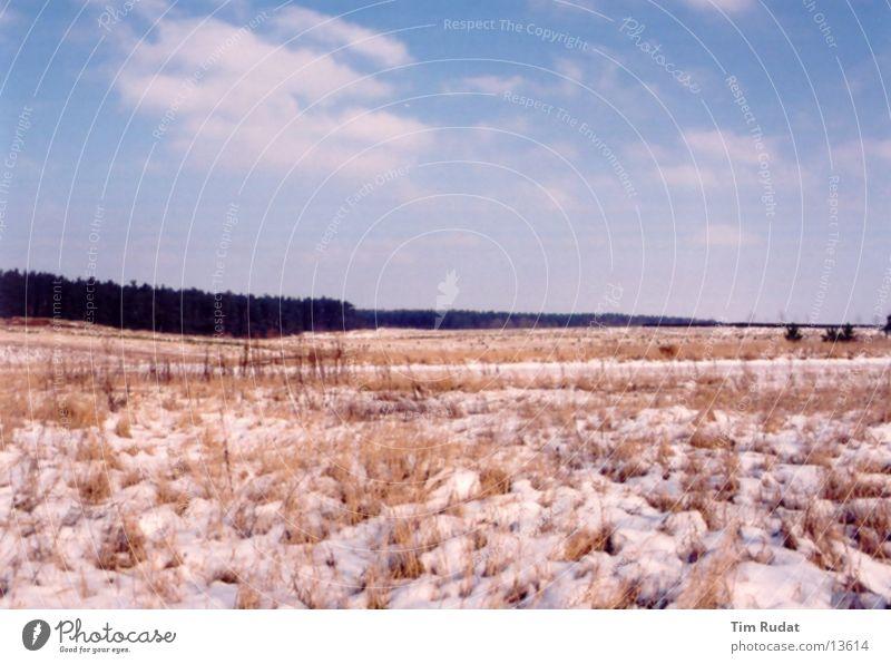 Linstow Winter Baum kalt Schnee