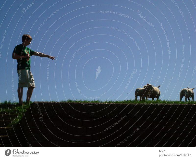 Schaf-Checker Deich Wolle Tier Gras Wiese Mann grün Shorts Finger Hügel Säugetier Himmel Lamm Küste Fluss Mensch blau Rasen Arme