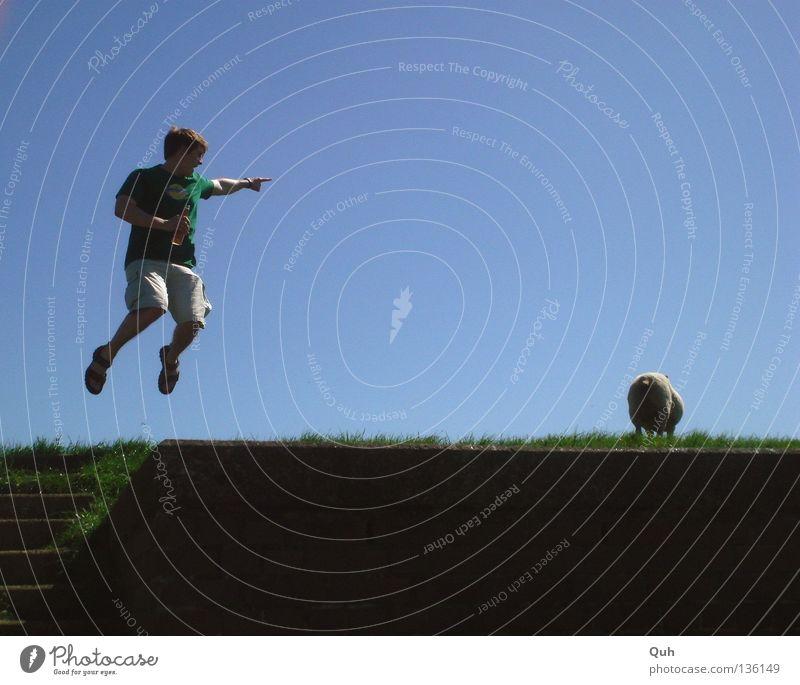 Rock am Deich I springen Mann Schaf Tier Wolle Gras Wiese hüpfen Sommer grün Lebensfreude Luft Shorts Landkreis Friesland Säugetier Mensch Rasen Weide Bewegung