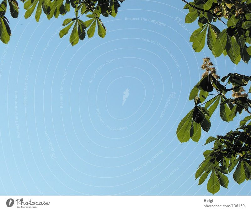 Blätterrahmen... Natur Himmel weiß Baum grün blau Blatt Blüte Frühling Park braun Zusammensein Wachstum Spaziergang Ast Am Rand