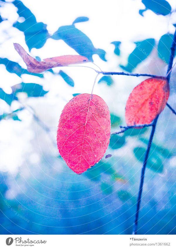 Herbst schön bunt Natur Pflanze Schönes Wetter Baum Blatt Wald ästhetisch frisch blau rot Stimmung achtsam Gelassenheit ruhig Endzeitstimmung Farbe Idylle