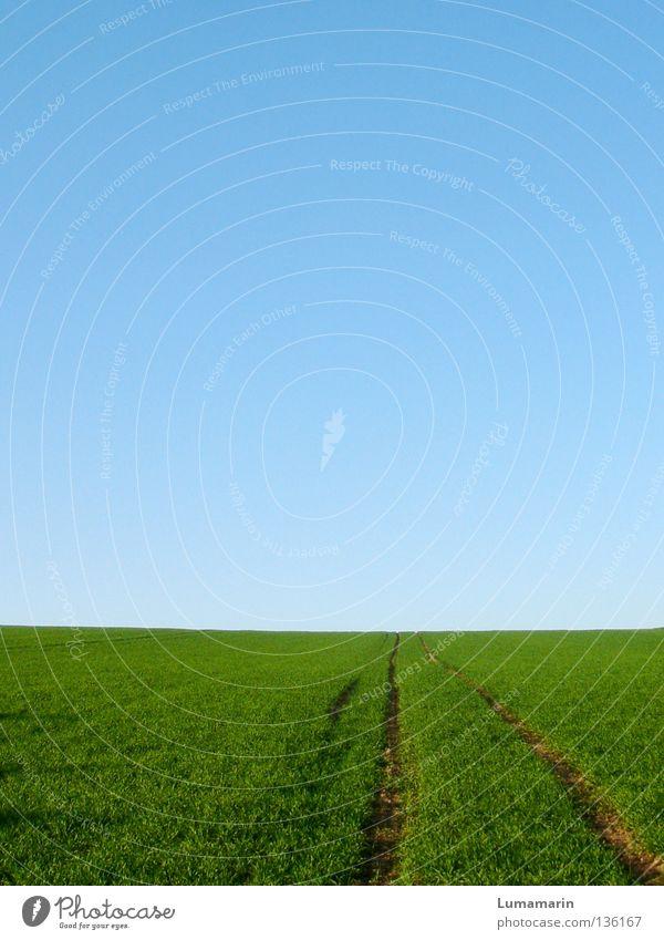 unkompliziert Himmel Sommer Ferne Wiese Frühling Gras Wege & Pfade Freiheit Glück Horizont gehen Feld Erfolg Wachstum Abenteuer Zukunft