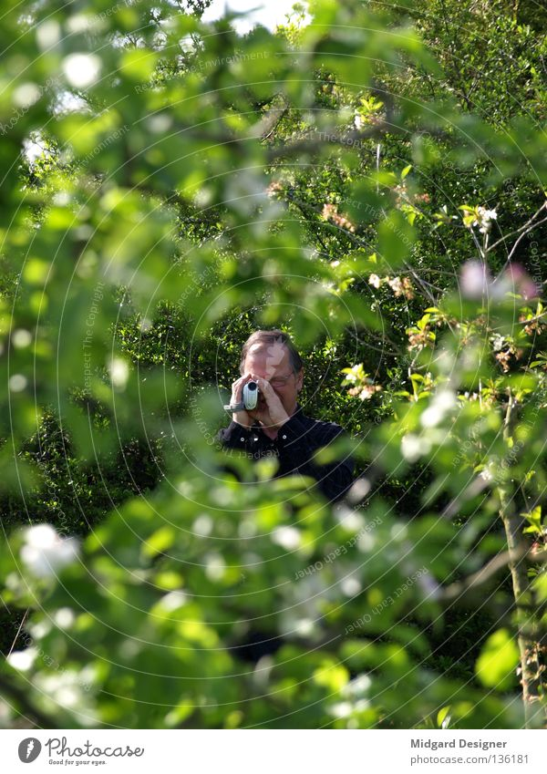 Observation Mensch Mann grün Baum Blatt Erwachsene maskulin beobachten Fotokamera Filmindustrie 45-60 Jahre geheimnisvoll Männlicher Senior verstecken Zweig