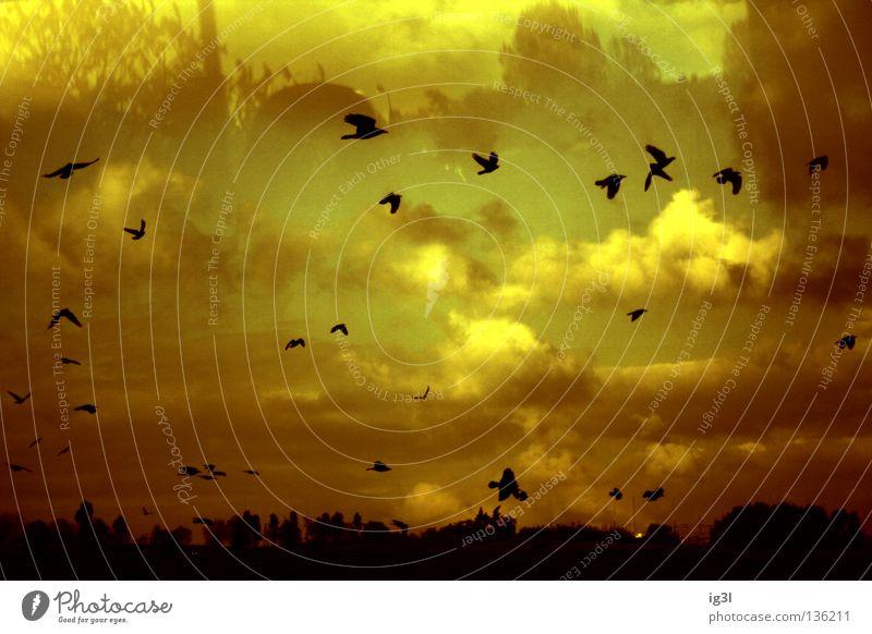 TRAUM°BILDER # burning heaven ´´'´'`` Himmel schön Landschaft schwarz außergewöhnlich Denken fliegen Vogel träumen Zukunft Vergänglichkeit Brand Wandel & Veränderung Schutz Unendlichkeit geheimnisvoll