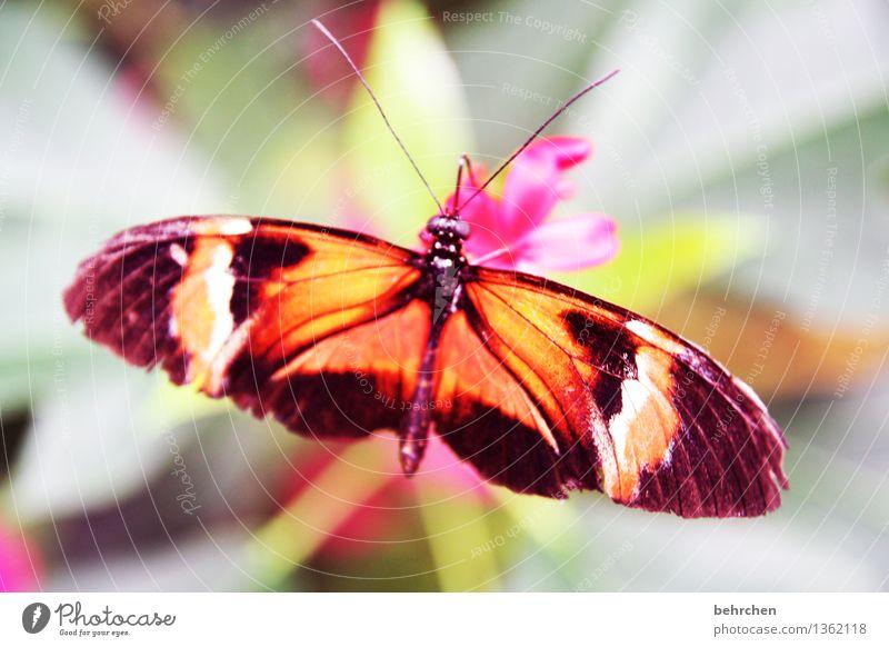oben auf Natur Pflanze Tier Baum Blume Sträucher Blatt Blüte Garten Park Wiese Wildtier Schmetterling Tiergesicht Flügel 1 beobachten Erholung fliegen Fressen