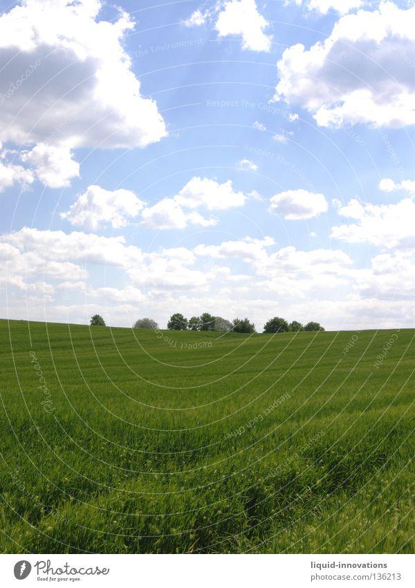 Freiheit III Feld Gras Gerste Baum grün Physik Frühling Kraft frisch saftig Wolken Horizont Sommer Himmel Wärme Natur frei blau