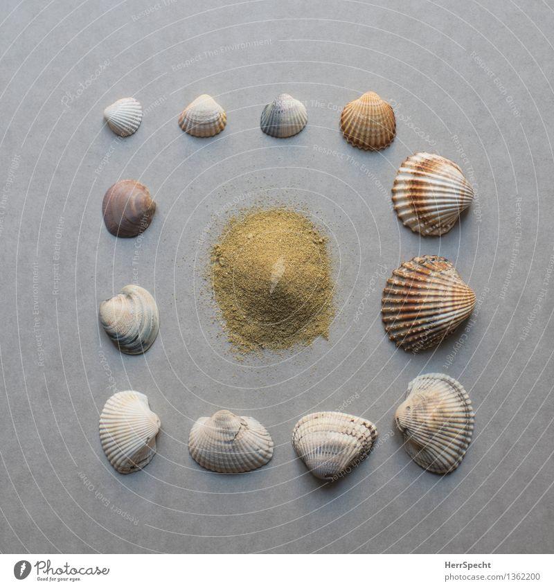 Bausatz Strand Souvenir Sammlung schön natürlich braun grau Stillleben Muschelschale Sand Sandstrand Urlaubsstimmung Farbfoto Gedeckte Farben Innenaufnahme