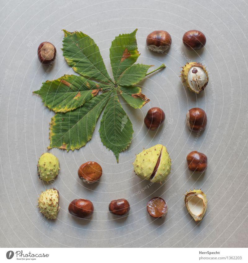 Kastanisch Pflanze Blatt Sammlung natürlich braun grün Super Stillleben Natur Ernte Kastanie Kastanienblatt Herbst herbstlich Anordnung knolling Farbfoto