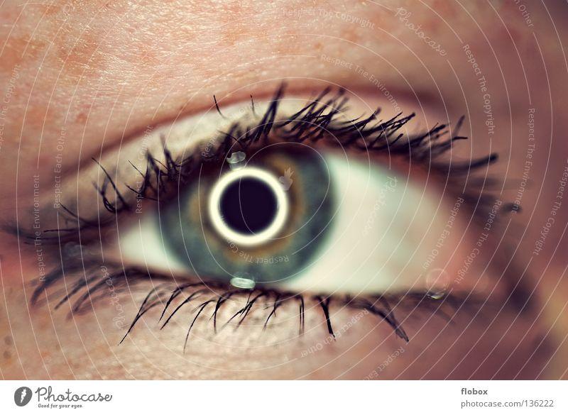 Schwesterchen Pupille Wimpern Mensch Sinnesorgane Schminke geschminkt Wimperntusche Lidschatten Frau feminin schön Kosmetik betonen Licht Sommersprossen