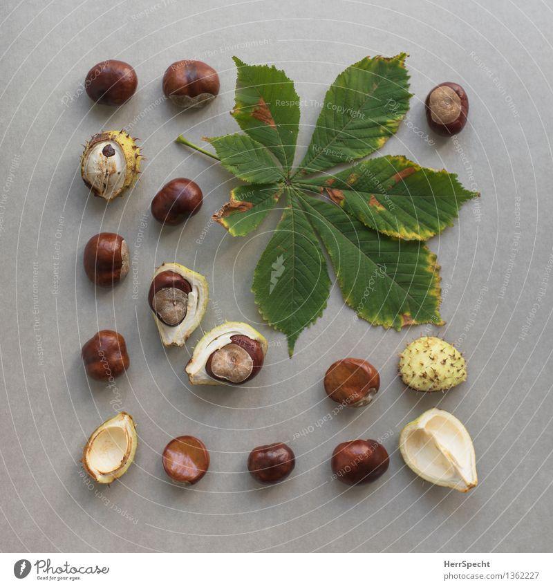 saisonal Herbst Pflanze Blatt Grünpflanze glänzend natürlich rund braun grün Kastanie Kastanienblatt Frucht Samen Hülle Stillleben Anordnung Sammlung herbstlich