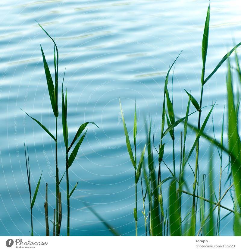 Schilf Himmel Natur blau Wasser grün Pflanze Meer Umwelt Wiese Gras Stil See Luft träumen Hintergrundbild Wellen