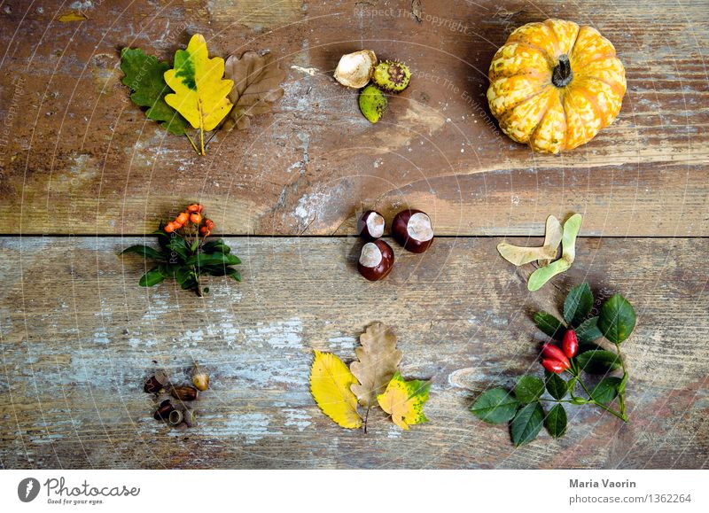 Herbst im Detail Lebensmittel Gemüse Natur Pflanze Sträucher Blatt Grünpflanze Holz verblüht Umwelt Vergänglichkeit Wandel & Veränderung Herbstlaub Kürbis