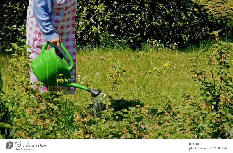 Kittelschurz Frau Mensch alt Pflanze Sommer ruhig Erwachsene feminin Leben Senior Garten Gras Frühling Zufriedenheit Arbeit & Erwerbstätigkeit Vergänglichkeit