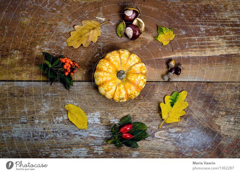 Herbst im Detail 2 Lebensmittel Gemüse Natur Pflanze Sträucher Grünpflanze Holz Vergänglichkeit Anordnung Wandel & Veränderung Super Stillleben Vogelbeeren