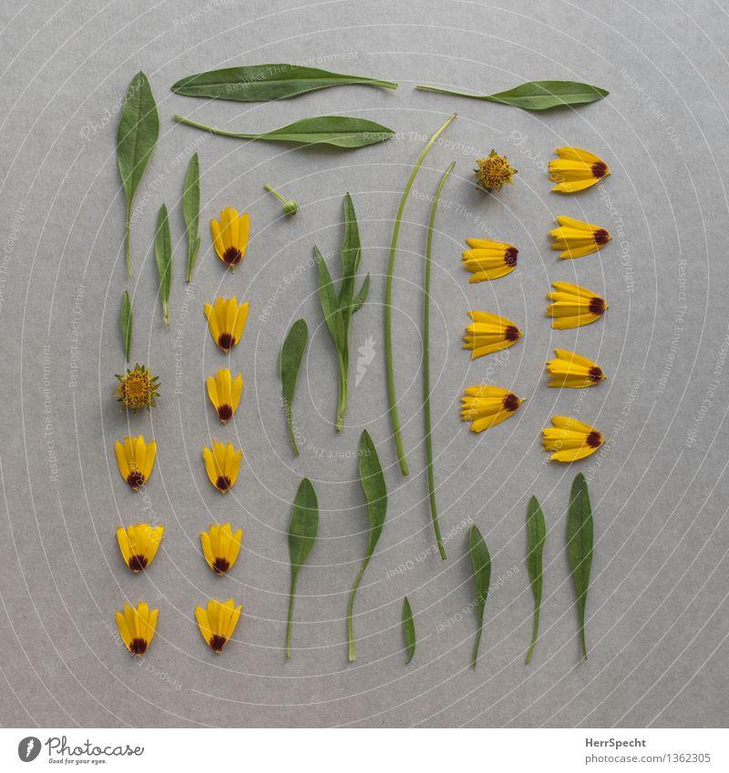 Bausatz Blume Pflanze Blatt Blüte ästhetisch kaputt lustig gelb grau grün Super Stillleben Teile u. Stücke Anordnung Knolling Teilung Baukasten Sammlung