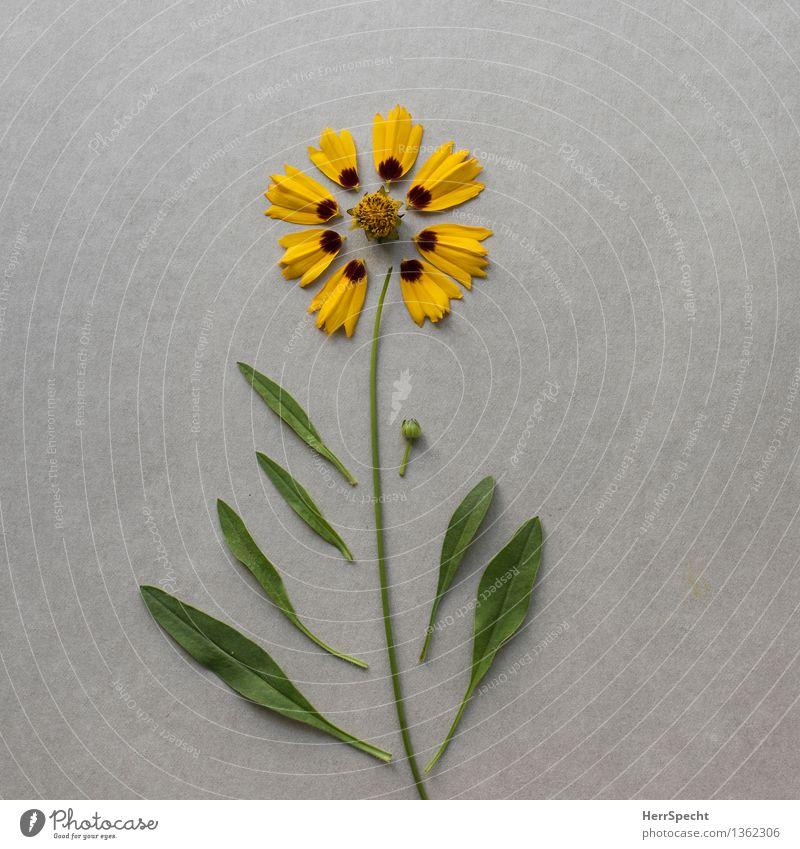 Bausatz Blume II Pflanze grün Blatt gelb Blüte lustig grau ästhetisch kaputt Stillleben Basteln verbinden Schaffung repariert Super Stillleben