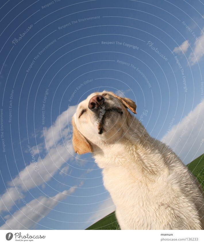 Carpe Diem Himmel Hund grün schön Sommer Tier Wolken ruhig Erholung Wiese Freiheit hell Kraft blond Nase trist