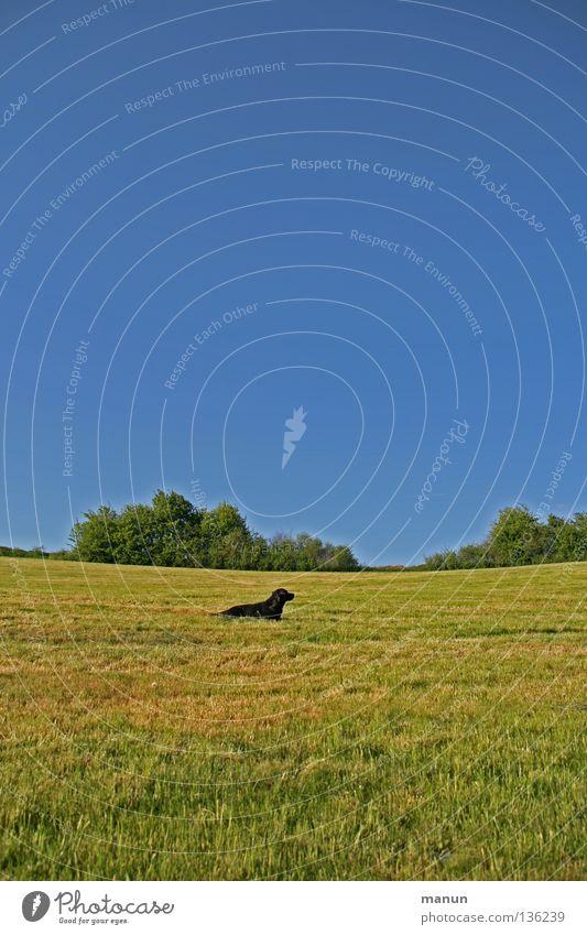a dog's meadow Natur Himmel grün Sommer ruhig Tier gelb Ferne Erholung Wiese Gras Frühling Freiheit Hund Wärme Landschaft