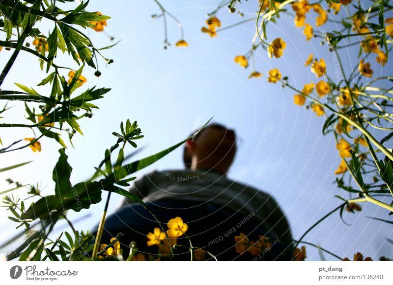 Flower Power Sommer grün Wiese Blume Pflanze Natur Himmel Sonnenlicht ruhig Ferien & Urlaub & Reisen angenehm Physik mehrfarbig Außenaufnahme Landschaft