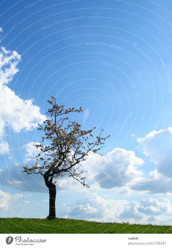 einsam Einsamkeit Baum grün Wolken Wiese Frühling ruhig mono Himmel blau Sonne