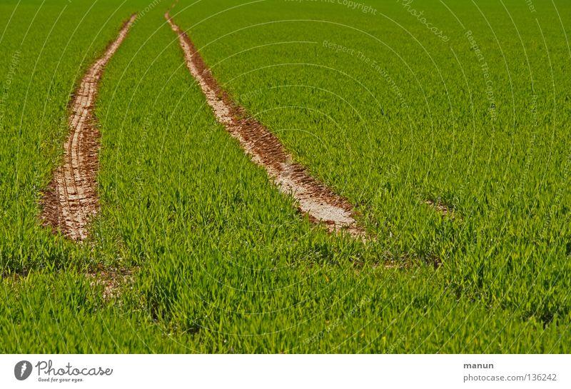 Prägung Natur grün Pflanze Frühling Landschaft Wege & Pfade Linie Feld Erde frisch Wachstum authentisch Spuren Getreide Landwirtschaft Halm
