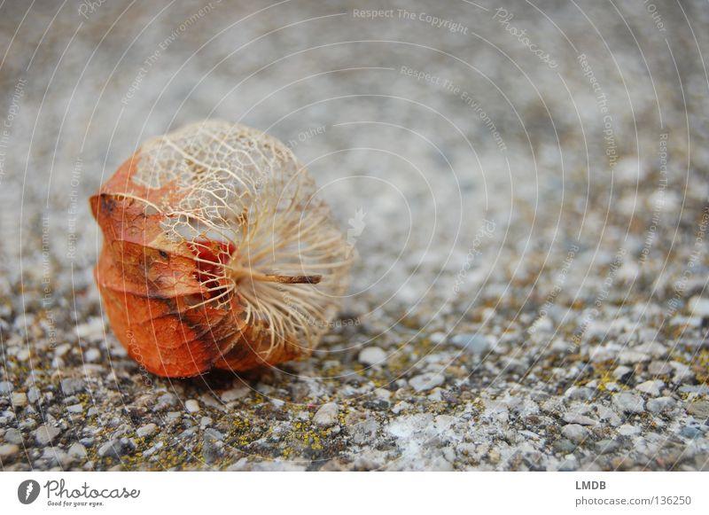Abschied alt Pflanze Blume ruhig Leben Erholung Tod Herbst Sand Stein Traurigkeit orange Herz Haut Frucht kaputt