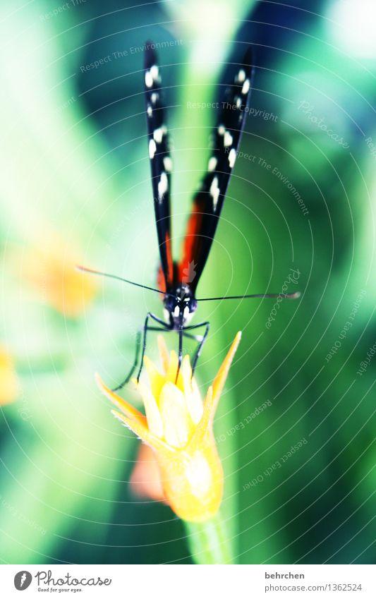 staubsauger Natur Pflanze Tier Frühling Sommer Schönes Wetter Baum Blume Blatt Blüte Wildpflanze Garten Park Wiese Wildtier Schmetterling Tiergesicht Flügel 1