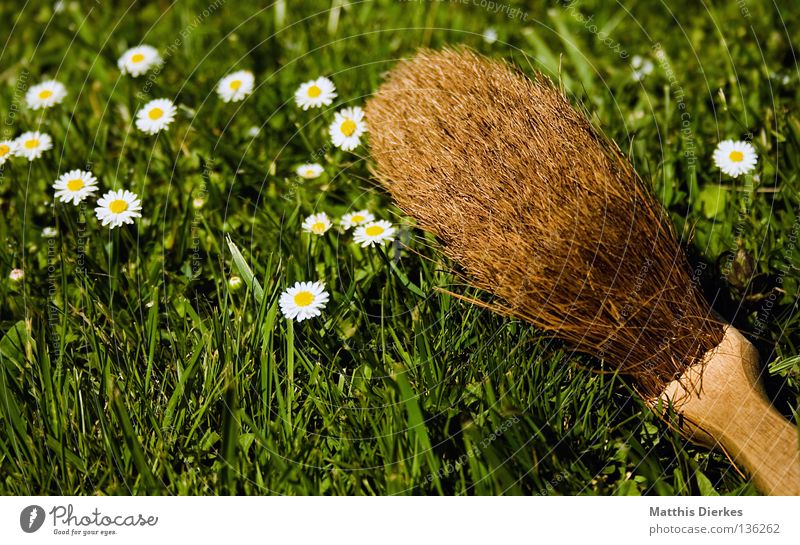 Besen Sommer Wiese Frühling Garten Arbeit & Erwerbstätigkeit Ordnung Häusliches Leben Flügel Reinigen Dinge Sauberkeit Rasen Umzug (Wohnungswechsel) Handwerk Putz Gänseblümchen