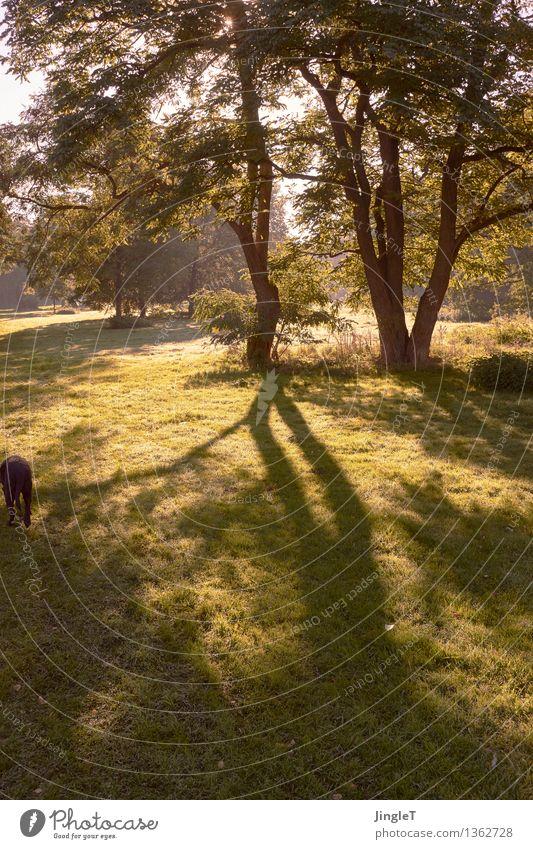 gegenlichthündin als randerscheinung wandern Umwelt Natur Landschaft Pflanze Tier Herbst Baum Gras Haustier Hund 1 blau braun gelb gold grün schwarz