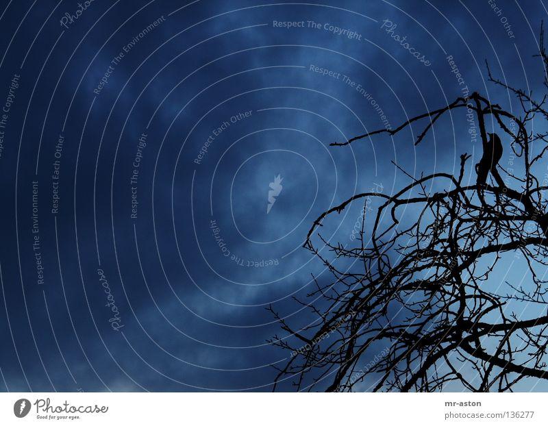 Unheil zieht auf Himmel Wolken dunkel Vogel gefährlich bedrohlich Ast böse unheilbringend