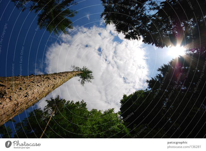 """""""Palme"""" Stock Baum Tanne Fichte Wald Wolken Sommer Sträucher Löwenzahn Stein Sonne Refektion Blendenfleck Himmel Natur Contre-jour Contre-jour-shot"""