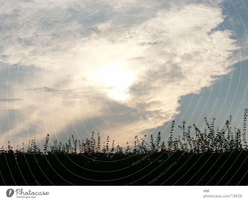 Sonnenwolken Wolken Gras