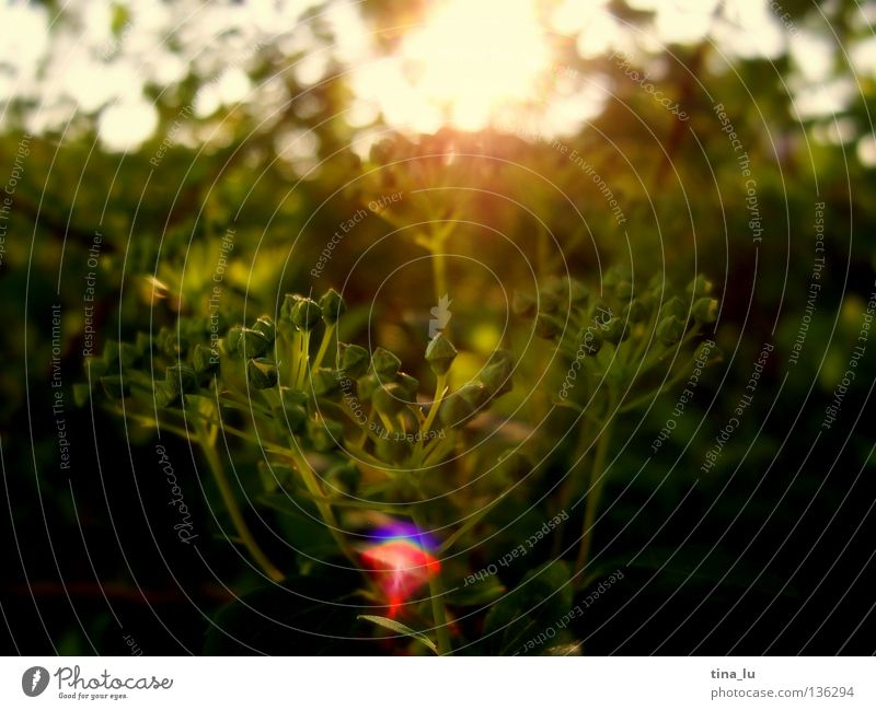Abendstimmung Abendsonne glänzend Physik heizen Blatt Sträucher Baum rot Frühling Sommer Herbst brennen Am Rand Ecke glühen Sehnsucht mehrfarbig Geborgenheit