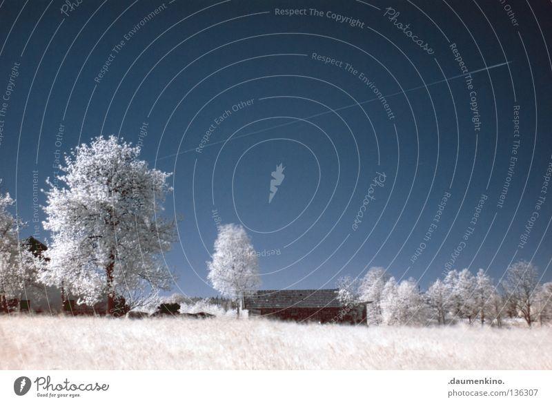 Pollenflug Wiese Gras Baum Personenzug Infrarotaufnahme fremd weiß Ferien & Urlaub & Reisen träumen ungewiss traumhaft Farbinfrarot außergewöhnlich Flugzeug